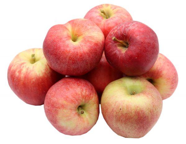 Bleichhof Äpfel Royal Gala - feste, süße Sorte aus der Pfalz (5kg) Neue Ernte