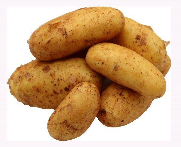 Bleichhof 5kg Ernte 2021 Allianz Kartoffeln aus der Pfalz - Sorte: Allianz festkochend Salatkartoffel