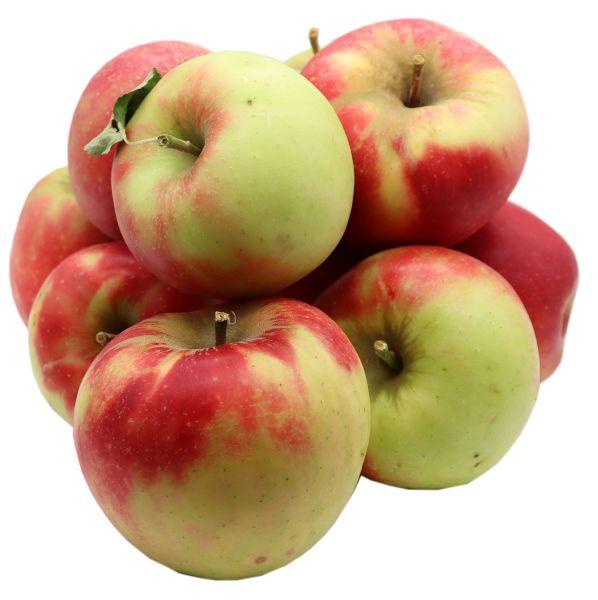 Bleichhof Äpfel Elstar – saftige fein-säuerliche Sorte, aus der Pfalz (5kg) Neue Ernte