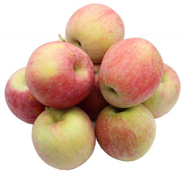 Bleichhof Äpfel Fuji - süße und sehr saftige Sorte aus der Pfalz (5kg) Neue Ernte 2020